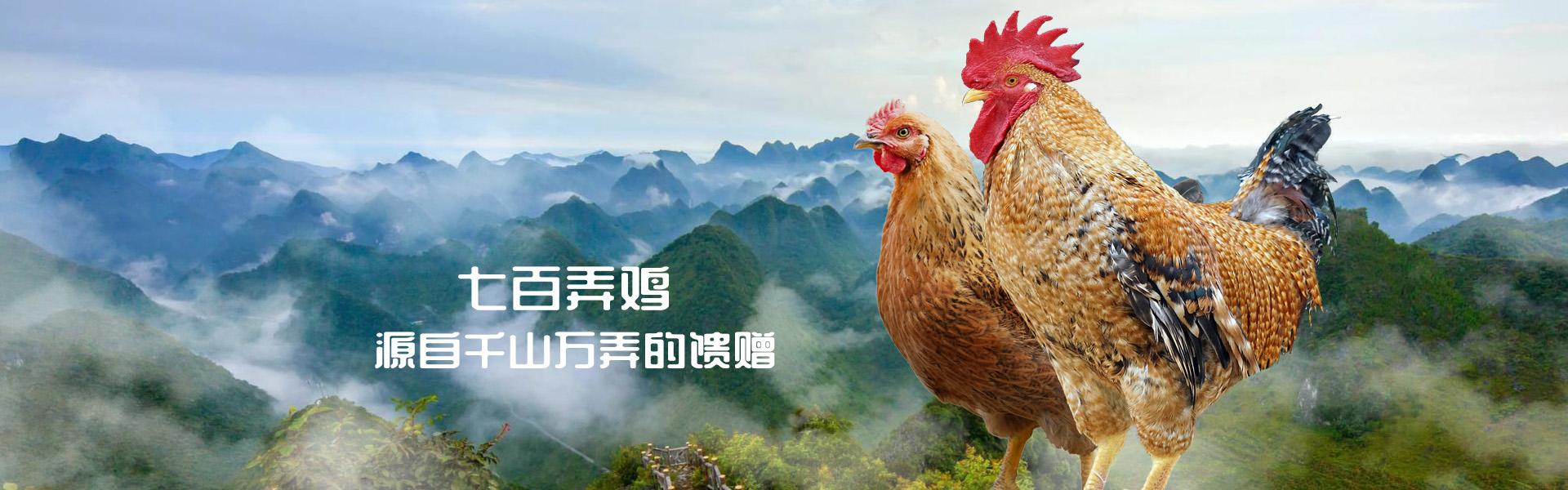 广西大化七百弄鸡